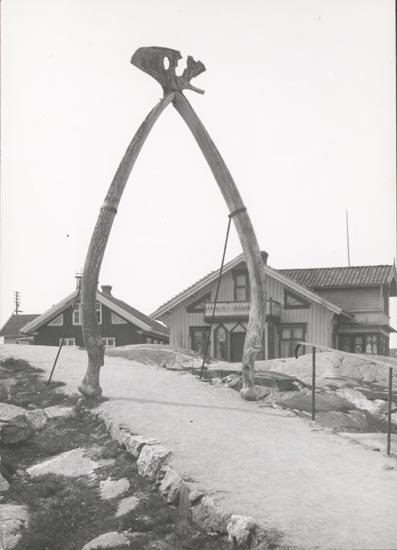 """Noterat på kortet: """"KÄRINGÖN"""". """"FOTO (D50) DAN SAMUELSON 1924. KÖPT AV DENS. DEC. 1958""""."""