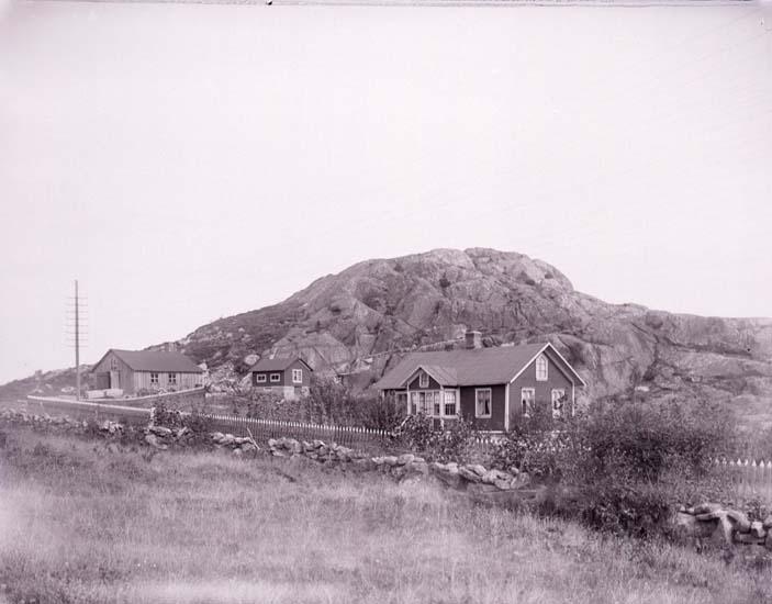 """Enligt text som medföljde bilden: """"Buahöjd den 30/8 1913 Pirol"""". ::"""