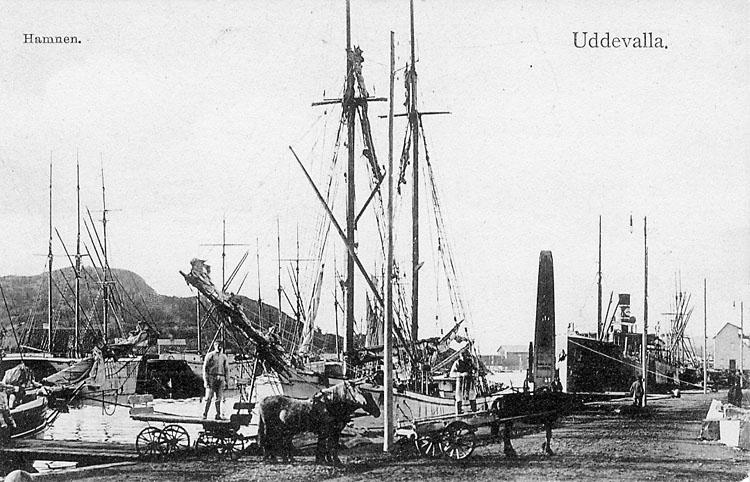 """Tryckt text på vykortets framsida: """"Hamnen Uddevalla"""".  ::"""