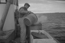 Räkfiske på SD 258 FALKEN, från Strömstad