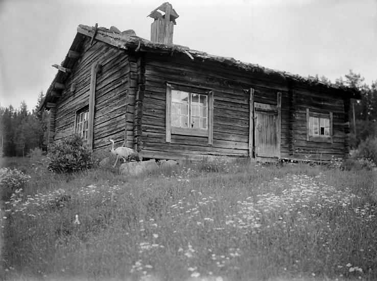 Finnpörte, Bogen, Värmland.