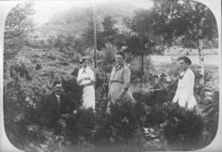 UMFA54429:1909