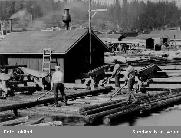 """Skönviks sågverk. Bild på """"mosläggning"""" av timmer för vinterbruk."""