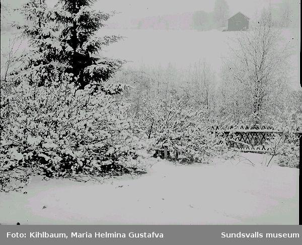 Vinterträdgård.