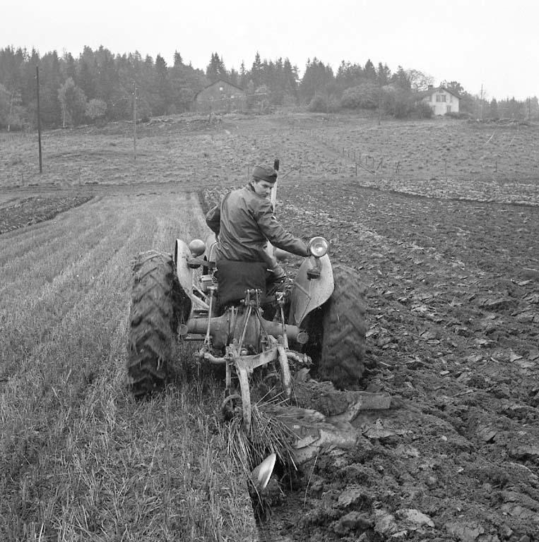 Plöjning med hjälp av en Grålle med påkopplad tvåskärig plog, Forshälla oktober 1960