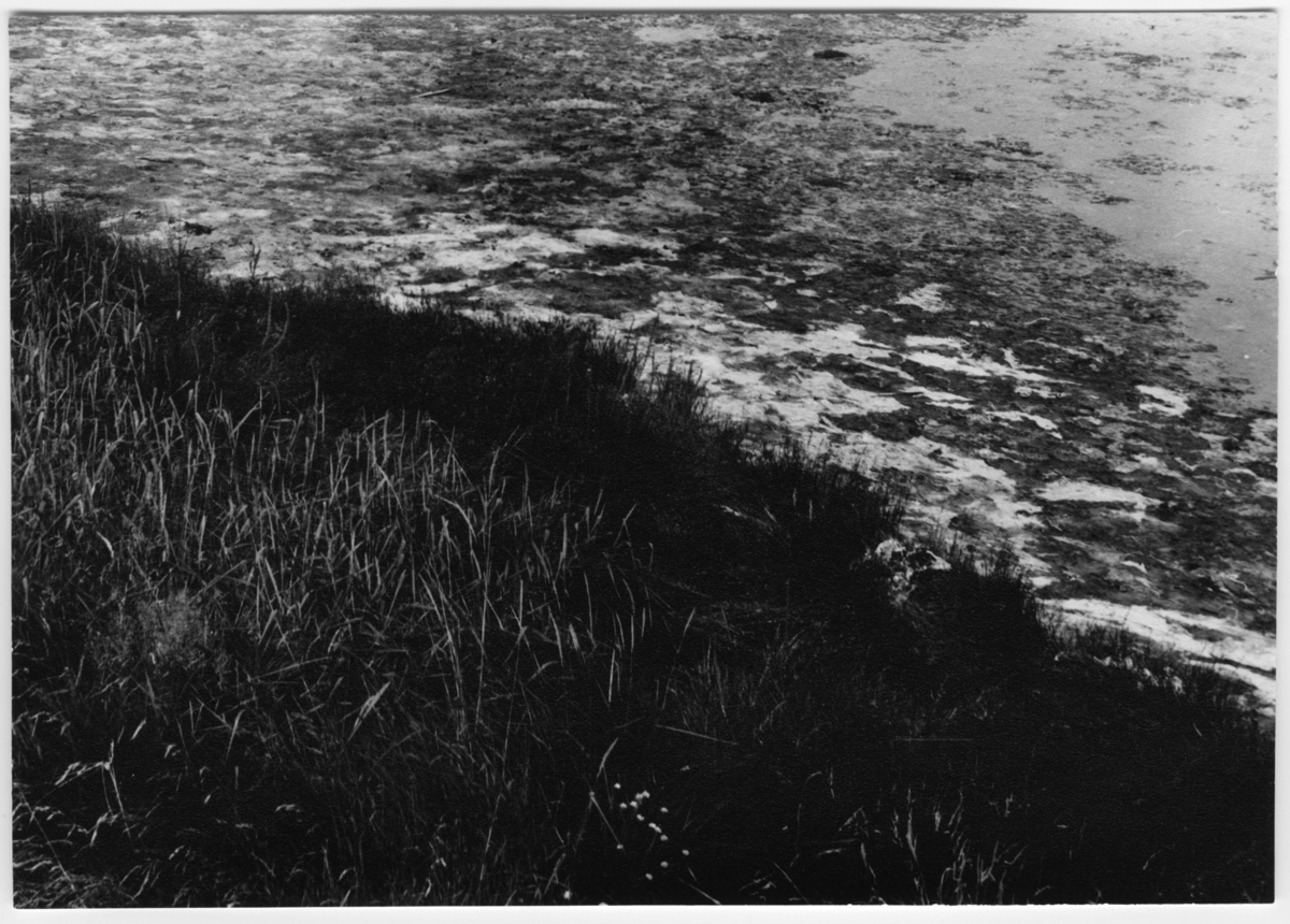 'Bild på strandkant, gräsbevuxen. Bildtext: ''Syrhåla.'' ::  :: Ingår i serie med fotonr. 7038:1-16 med bilder från fyndlokaler av skalbaggar i Göteborgstrakten, dessa lokaler finns beskrivna i anteckningsböcker med Arkivnr. 1542.'