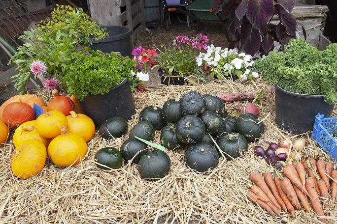 Høstmarked på Kvinnemuseet (Foto/Photo)