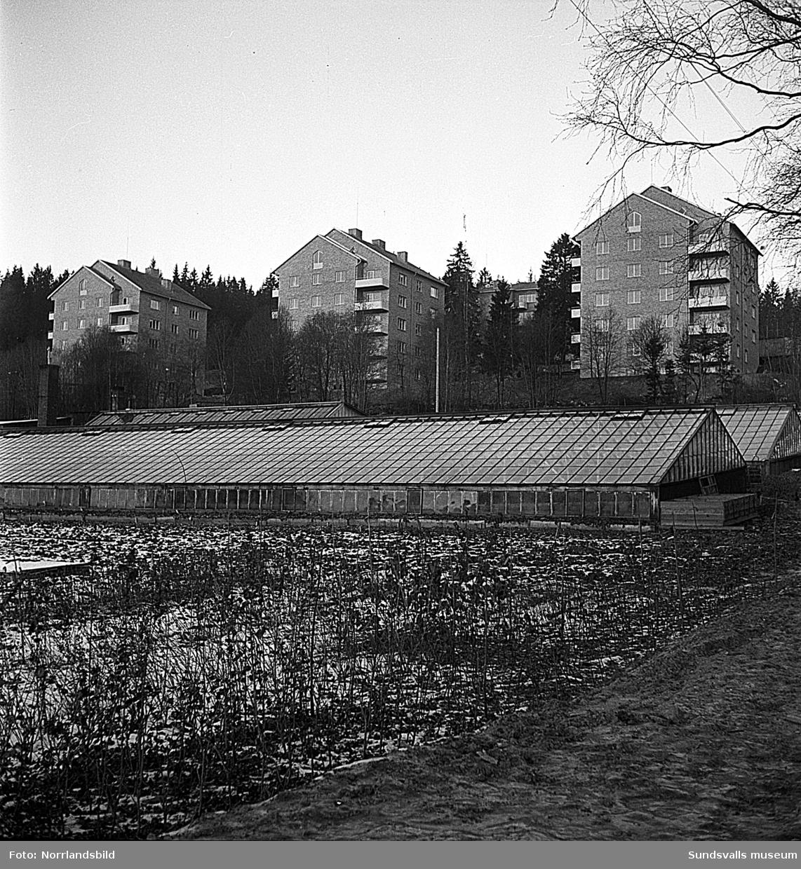 Punkthusen i Busbacken fotograferade söderifrån med växthusen vid Lindvalls handelsträdgård i förgrunden.