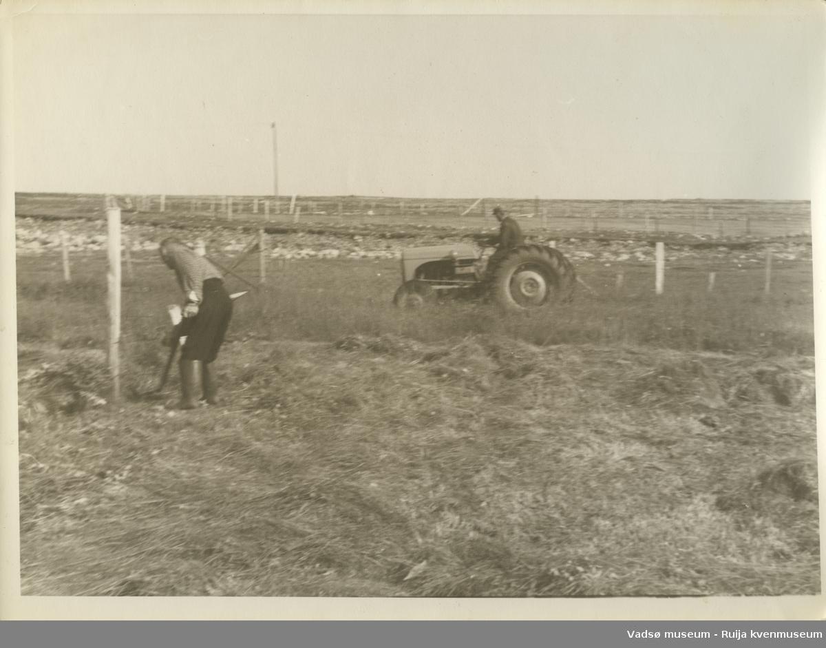 """Slåttearbeid på """"Myra"""" i Skallelv, ca. 1960. Edvin Bietilæ på traktor og Peder Bietilæ som slår."""