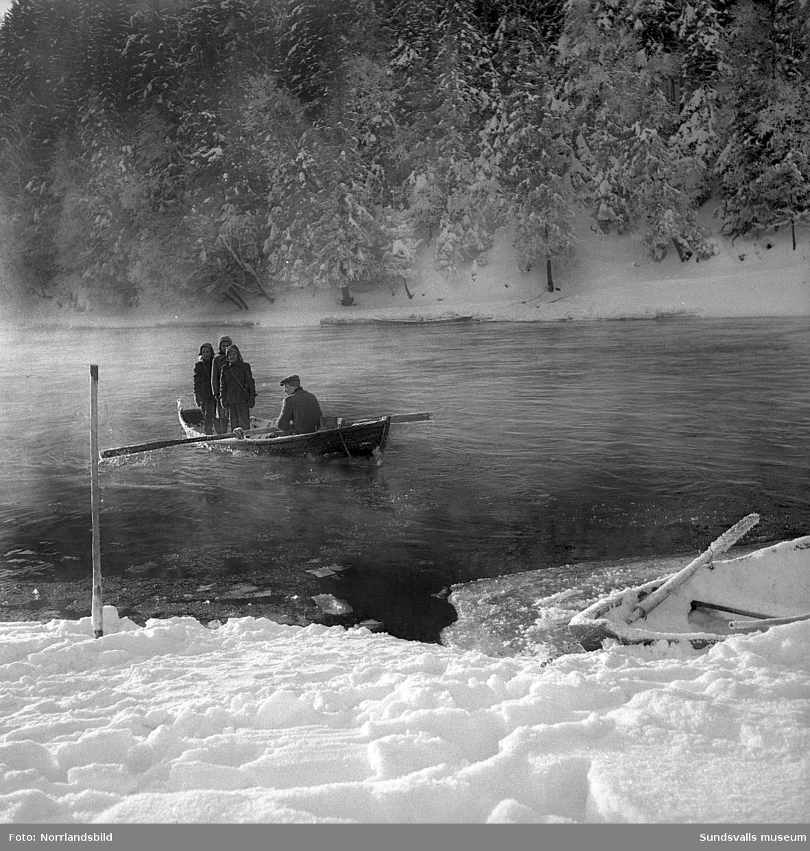 Tre flickor boendes på södra sidan av Ljungan vid Tunbyn fick varje dag åka roddbåt över älven för att ta sig till skolan i Klingsta. Samtidigt passade man på att forsla över mjölken från de två kvarvarande gårdarna på sörsidan. Flickorna är tvillingsystrarna Maud och Lillemor Hallén och Valborg Grundström och vid årorna satt denna dag i början av mars 1951 tvillingarnas bror Alf Hallén, som turades om med den sysslan med sin far Konrad Hallén. Väl i land så fick flickorna hjälpa till att dra kälken med mjölkkrukan upp till landsvägen. På en av bilderna syns hemmansägare Bernhard Åslund, Tunbyn, binda laxnot.