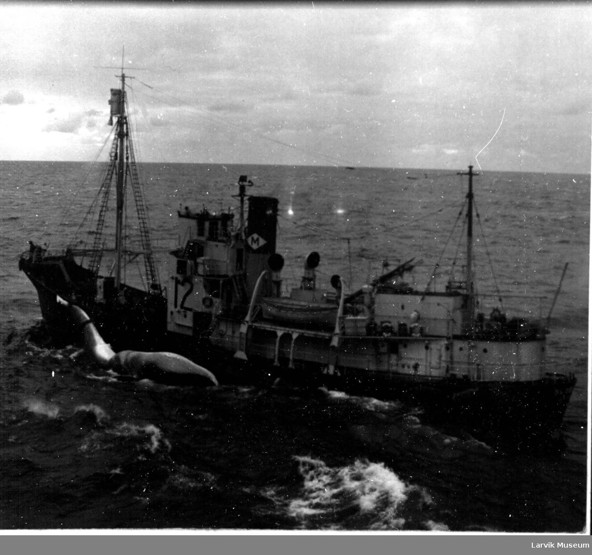Hvalbåt fra Melsom og Melsom med hval langs siden