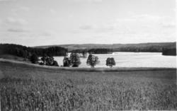 Stråken vid Broholm.