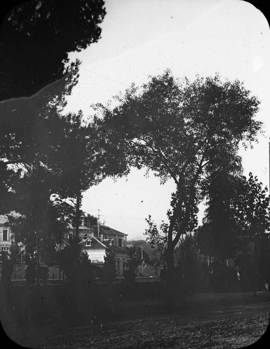 """Skioptikonbild med motiv av promenadstråket/ parken Paseo del Salon i Granada. Bilden har förvarats i kartong märkt: Granada 1910. Granada 9. N:8. Text på bild: """"Paseo del Salo´n""""."""
