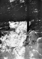 Diapositiv med motiv av skogsparti i vinterskrud. Troligen i