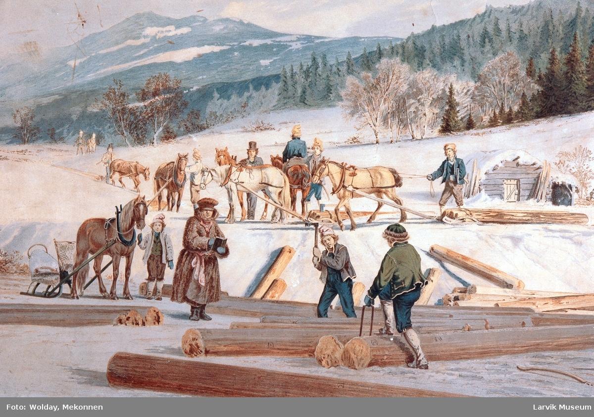 tømmerhogstarbeid (barking), 8 hester og 12 menn