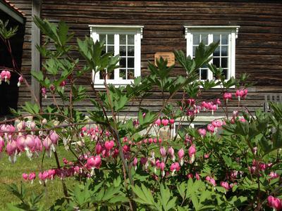 Blomster i Storbråtenhagen