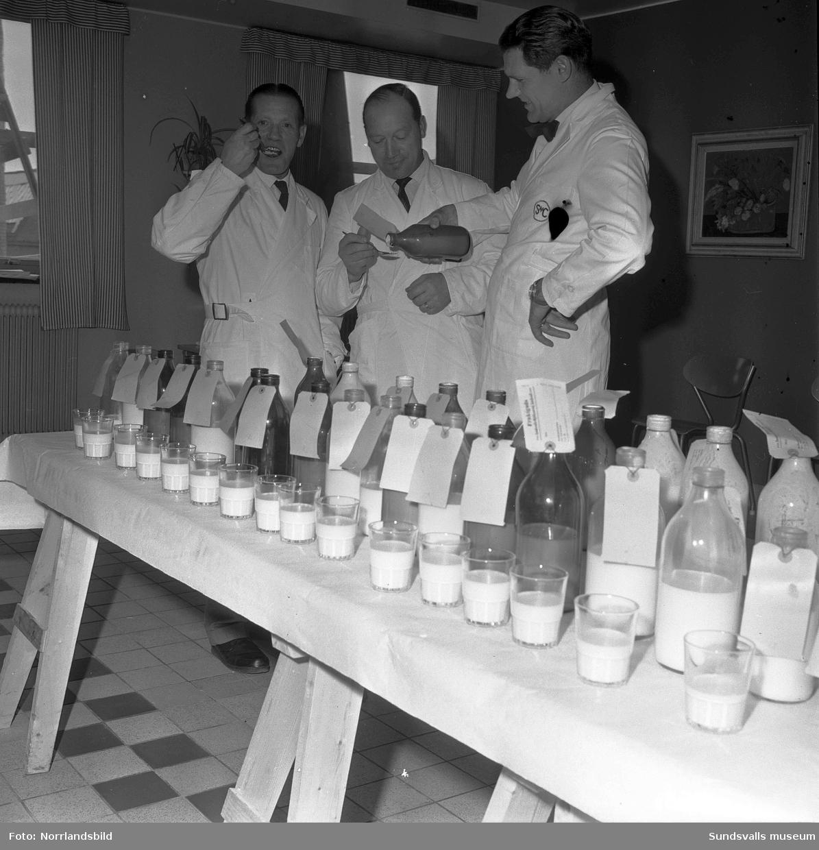 Mjölktest på SMC, Mjölkcentralen, i Nacksta.