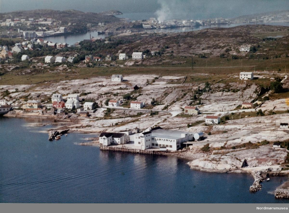 """Dette er ikke Algea, men fisketørkings-anlegget til A/S Vikan (den nye delen til høyre). Like til høyre for denne delen, på """"pynten"""", ble arbeidet  med de aller første delene av Vestbase startet, i 1979. (Info: Bjørn Brevik 2018) -  Flyfoto fra Nordlandet i Kristiansund.  Øverst til høyre i bildet kan man se Skorpa, og øverst til venstre i bildet ser man Gomalandet. Bildet er datert 11. juli 1962. Fra Nordmøre Museums samlinger. Tilleggsinfo: Dette er Anlegget, opprinnelig tilhørende Vikan AS. Senere holdt """"Myra (plast) båt"""" til her, inntil utbyggingen av Vestbase. Myra båt holder nå (2012) til hos Oss-Nor AS i Omagata ved innseilingen til Marcussundet. Algea AS har """"alltid"""" holdt til utenfor bildets venstre kant, ved krysset Fostervoldsgt x Omagata (Omagataa 78). Her er også den vestre nedkjøringen til Vestbase.   (Informant: Tor Arne Skålvik.)"""
