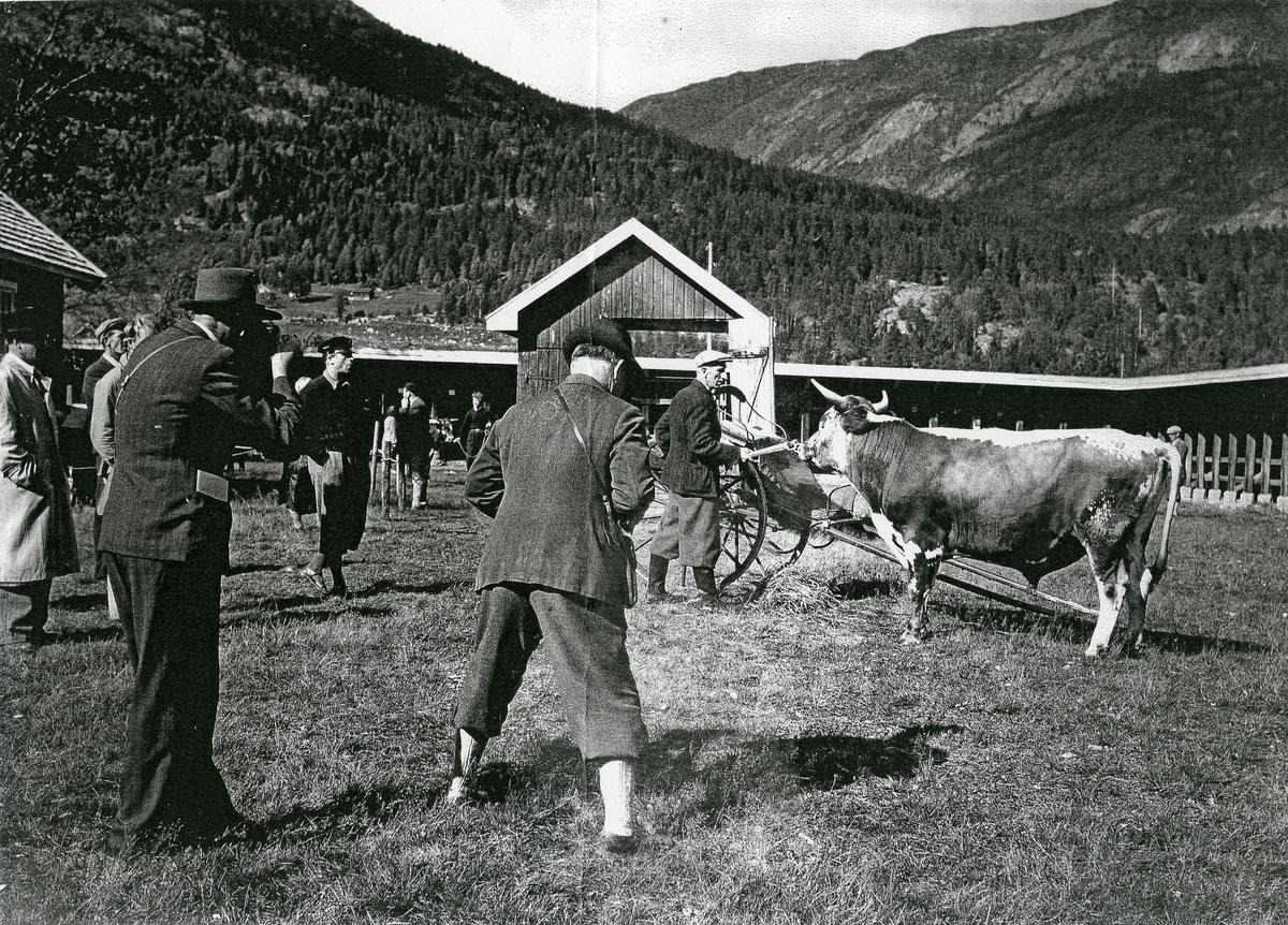 Filming av Telemarksfe
