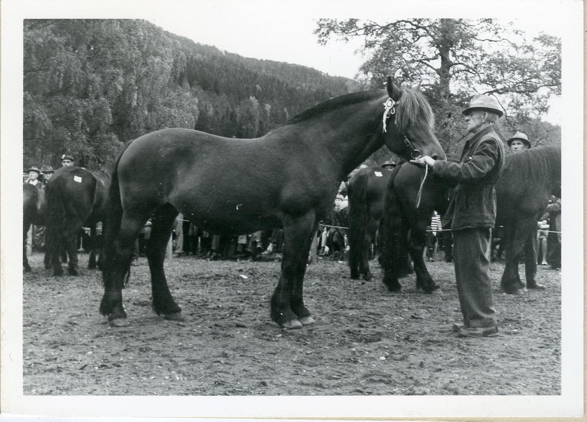 Gunnar Hagen med Telebruna.