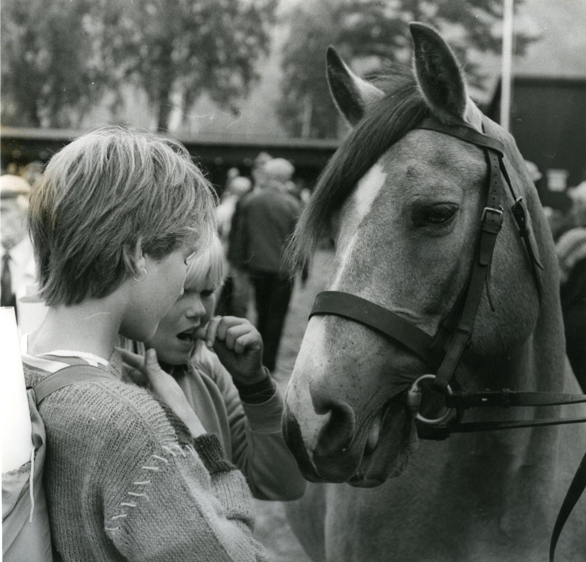 Hestejenter.