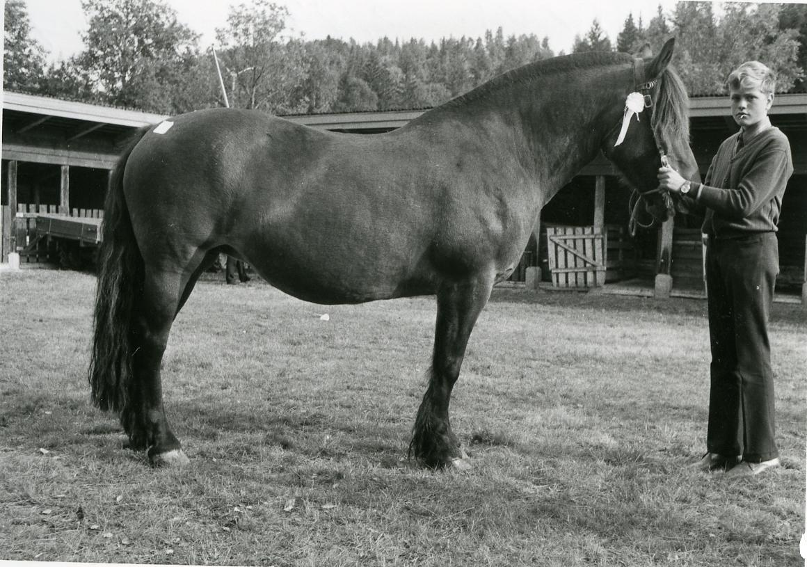 Gunnar Hagen Kåsa mønstrar Telebruna 21874 (7).