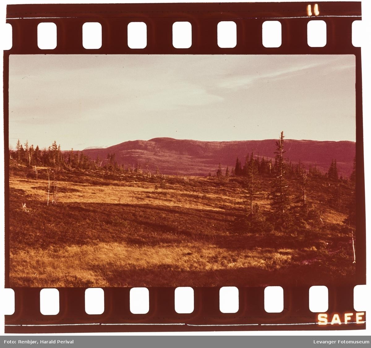 Fra skogen mot snaufjellet utenfor Levanger.