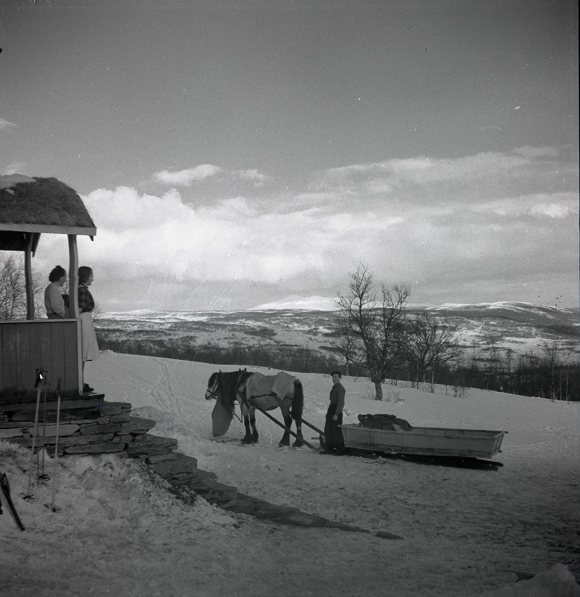En man har stannat framför ett hus med sin hästdragna släde. Två kvinnor har stigit ut på trappen och tittar mot ekipaget. Hästen har fått ett täcke över ryggen och hänger vilande med huvudet. I bakgrunden tornar snötäckta fjäll upp sig under en molntyngd himmel.