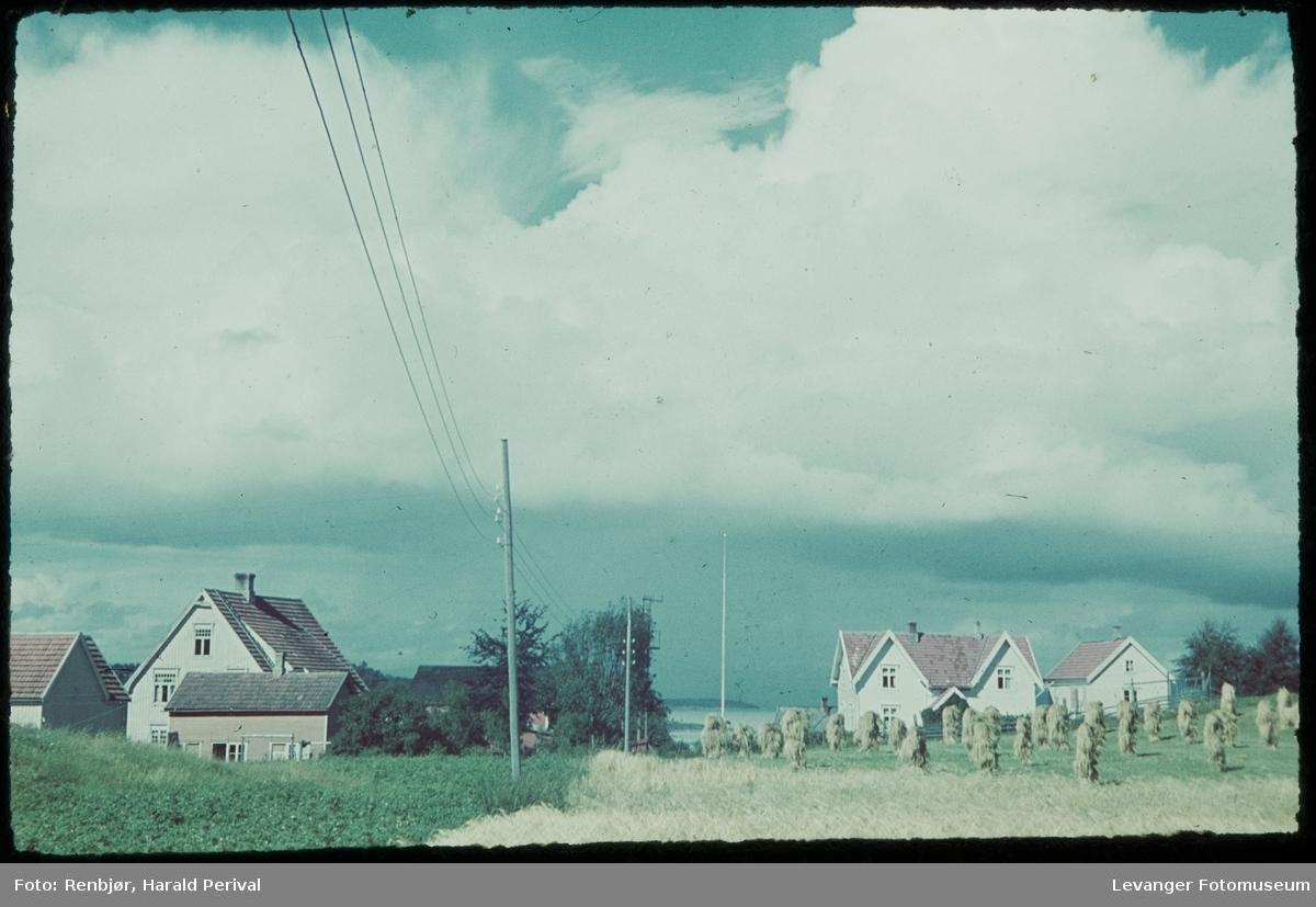 Korn på staur ved bebyggelse-
