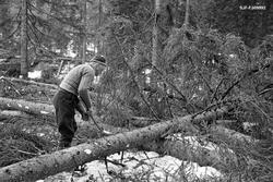 Skogsarbeider Gustav Tallakstad (1911-1982) fra Lardal i Ves