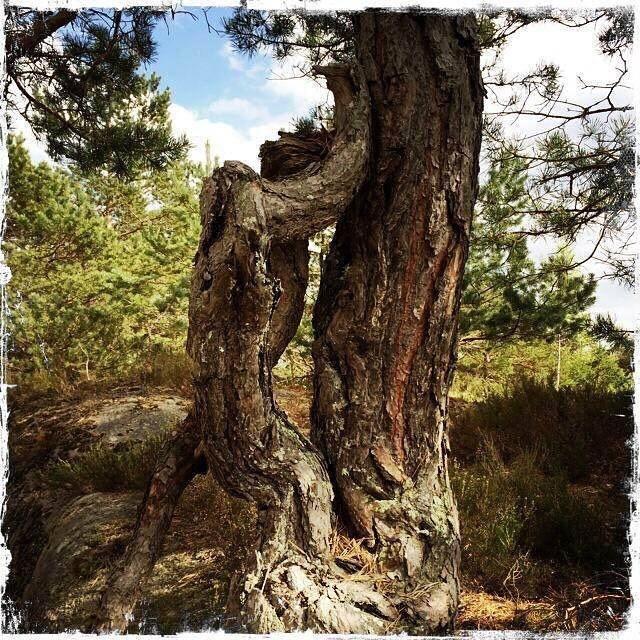 """Februarvinner i fotokonkurransen """"Det fantastiske treet""""."""