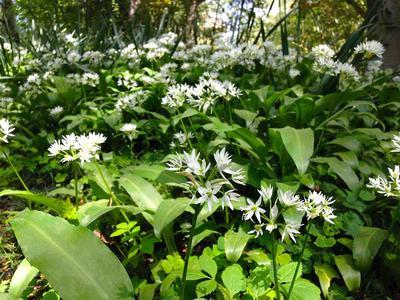 Foto av planter