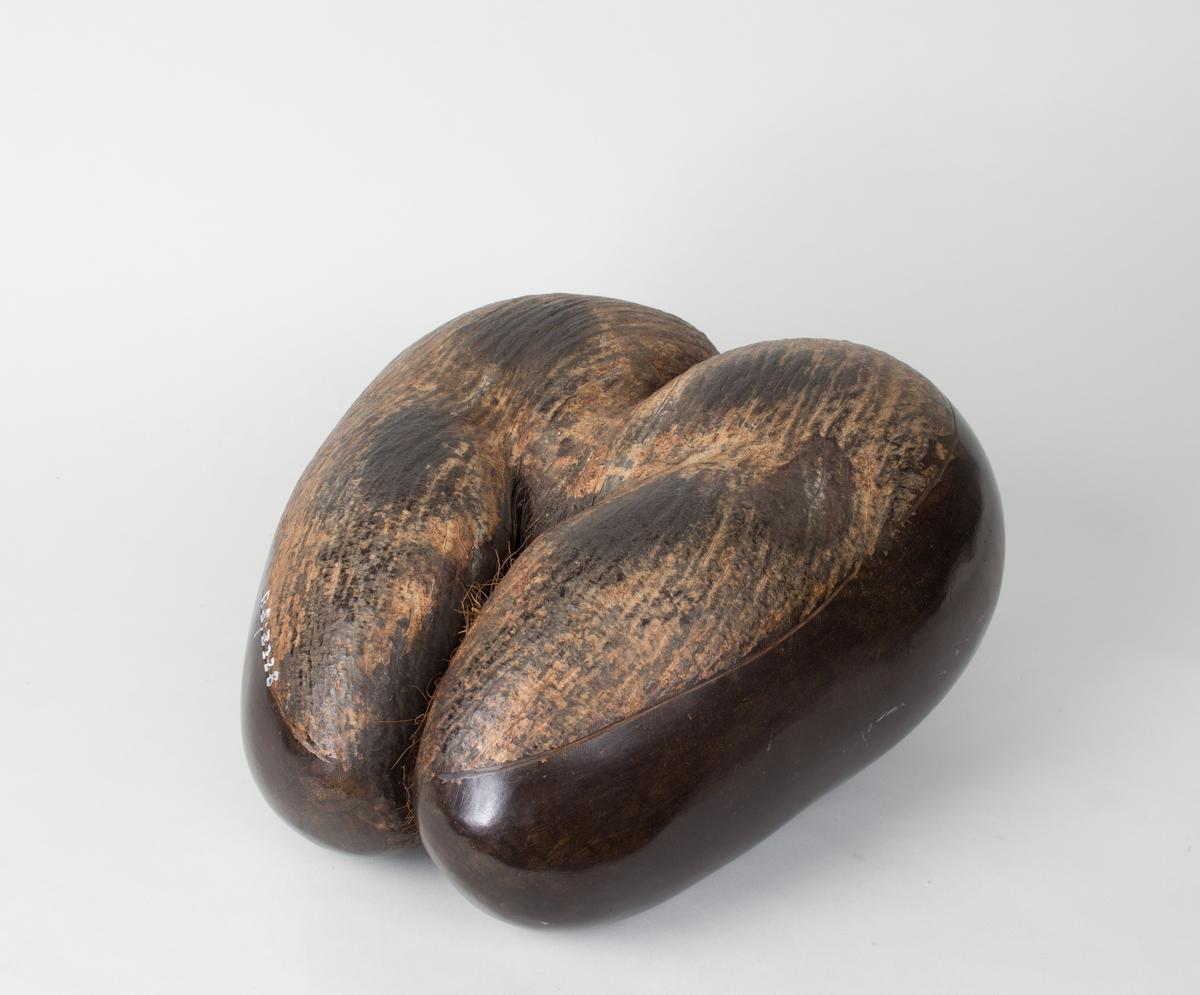 Dobbel kokosnøtt fra Seychellene. Nøtten er halveis polert og skallet er tatt av den ene halvdelen