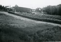 Stølsdokken i Åsgardo bra avling det året.