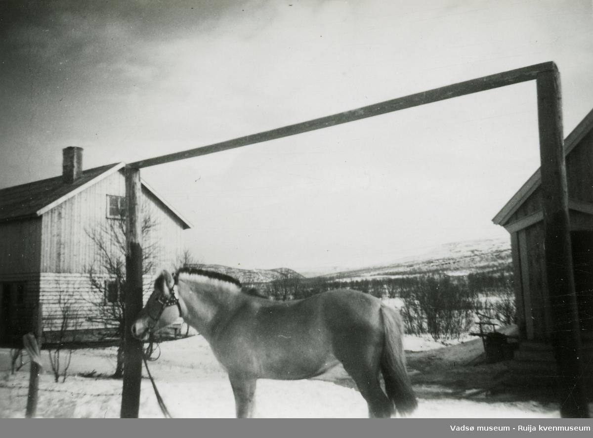 Gårdstun med hest, fjording. Gjenreisingsbeyggelse ca. 1948.