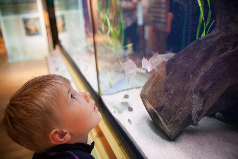 Museene-i-Akershus_Besoekssenter-vaatmark-nordre-oeyeren_akvarie.jpg