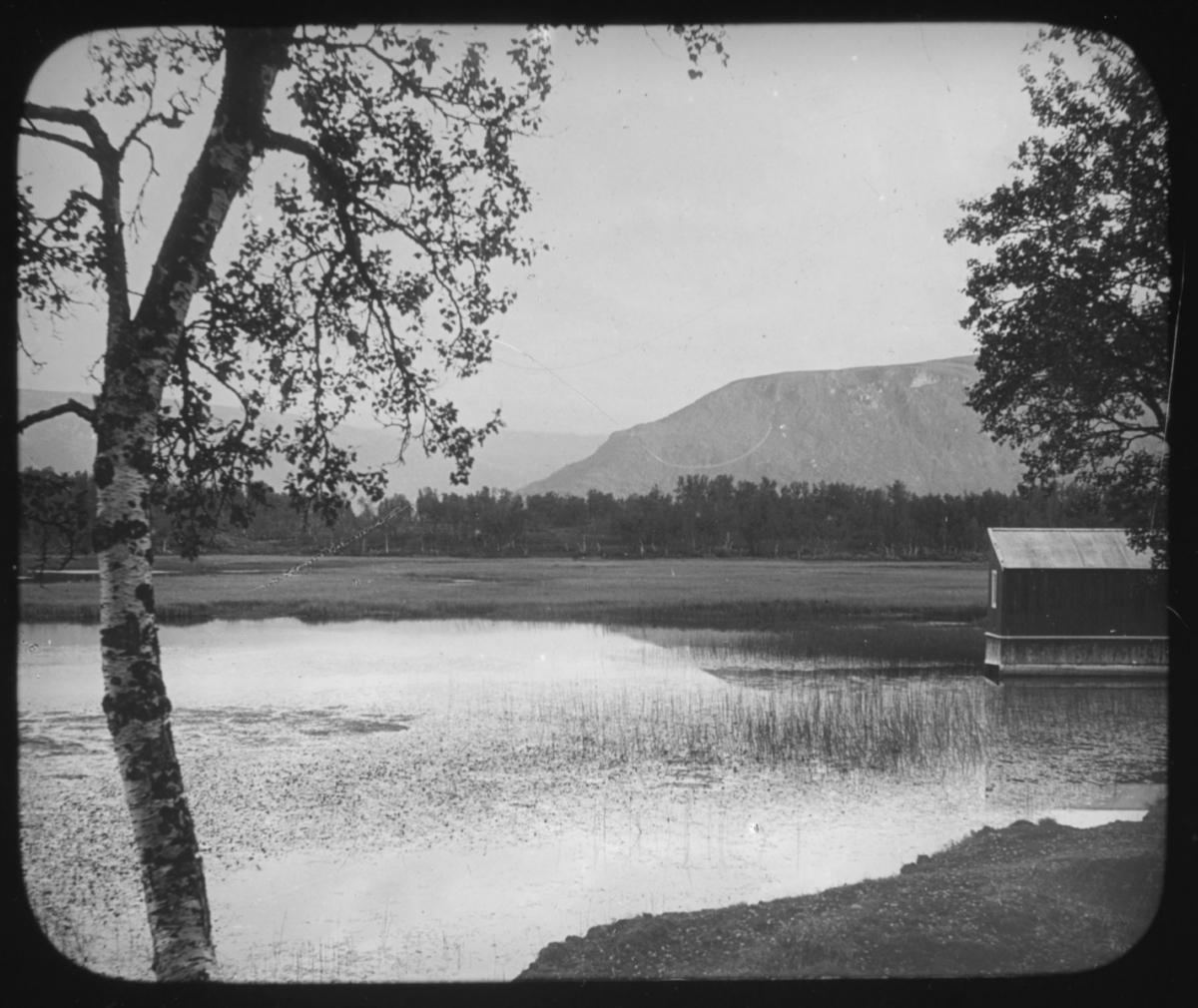 """""""Det Nordlige Norge. Serie 109. No. 9"""" står det på glassplaten. Landskapsbilde med bjørketre i forkant, en innsjø med strå og et naust eller en sjøbu til høyre i vannkanten. Fjell i bakgrunnen. Det er sommer og løv på trærne.  Bildeserien av botaniker Hanna Resvoll-Holmsen er fra Nordland, Troms og Finnmark. Vi vet at hun tilbrakte endel tid i Kjøllefjord, Lebesby, Finnmark, i 1909. Fotoserien er sannsynligvis tatt på reisen nordover og i Øst-Finnmark. Botaniker Hanna Resvoll Holmsen fikk et reisestipend fra Universitetet i Oslo for å kartlegge arktisk vegetasjon i 1909. To foredrag om en ekspedisjon til Svalbard i 1907 ga grunnlag for et reisestipendet fra Oslo Universitet til Øst-Finnmark i 1909. Hanna Resvoll-Holmsens Svalbardekspedisjon kom i stand med støtte fra fyrsten av Monaco, som ville gi ut en bok om Svalbard. Hanna  gikk alene i land på Svalbard i juli 1907 og tilbrakte en måned i telt, med gevær og utstyr for innsamling og preservering av planter. Studiene på Svalbard ble senere publisert med overskriften """"Observations botaniques"""" og utgitt i Monaco.  Hanna Resvoll Holmsen regnes også som pioner innen fargefotografi, de tidligste fra før 1910, blant annet fra Svalbard."""