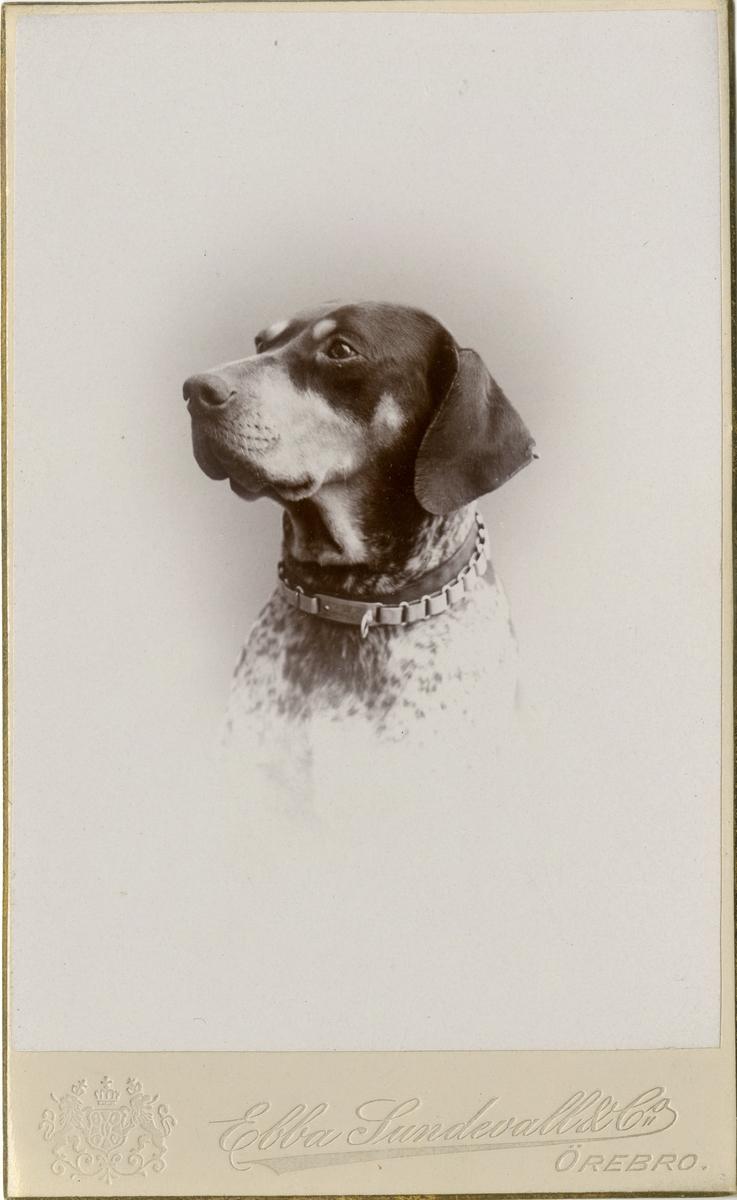 Porträtt av hunden Surran.