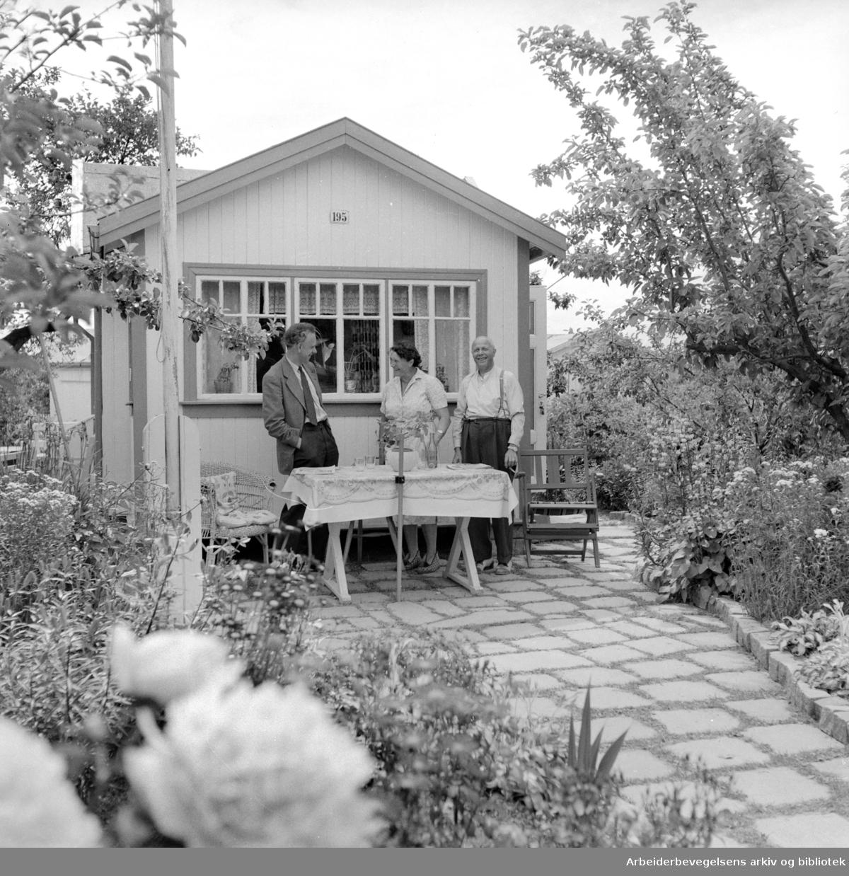 Rodeløkka Kolonihage. Juli 1957