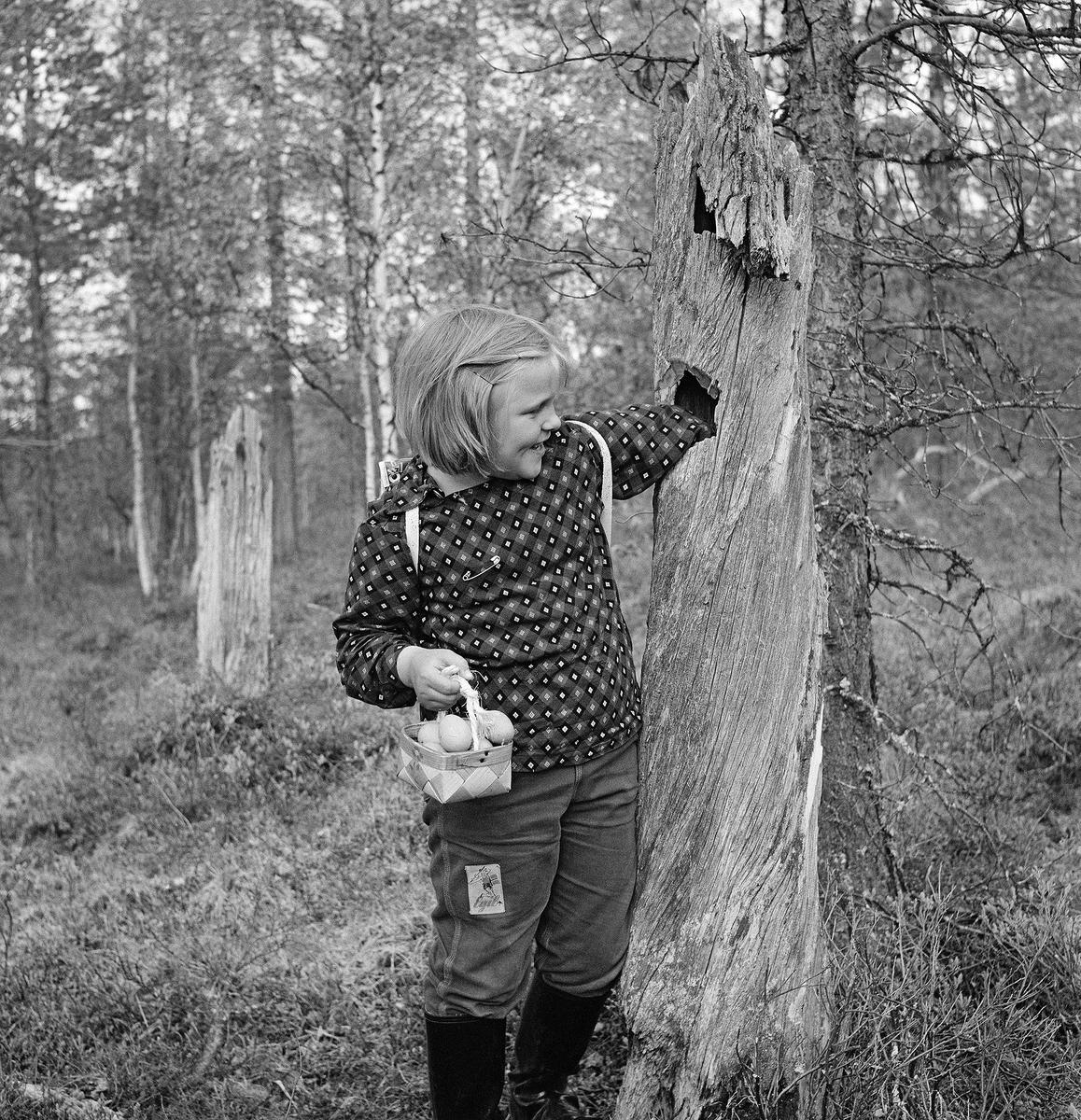 Kvinandegg i en liten neverkurv.   Etter dagens lovverk er det ikke lov å sanke egg, men i 1961 sanket Gerd Ingrid Kolbu kvinandegg fra reiret i trehullet. Bildet er tatt i 1961 av Kjell Søgård /Norsk Skogmuseum.