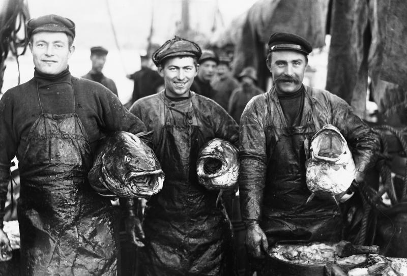 3 digre Torske (Skrei) 1910 (Foto/Photo)