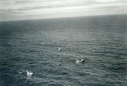 Flyfoto. Fiskebåter ved Nordkapp. 22.08.1953.