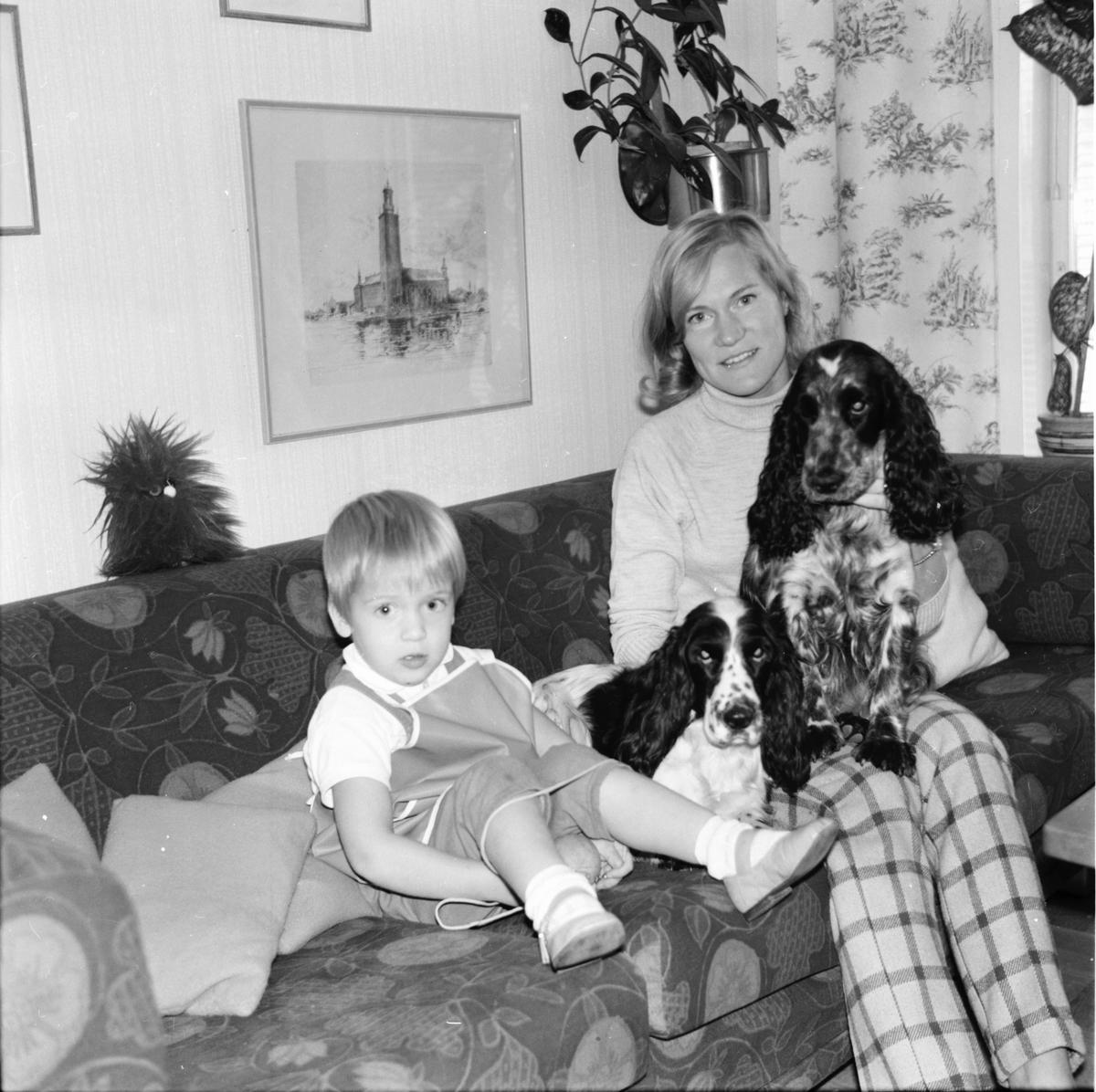 Stiftsgården. Hundar i Koldemo