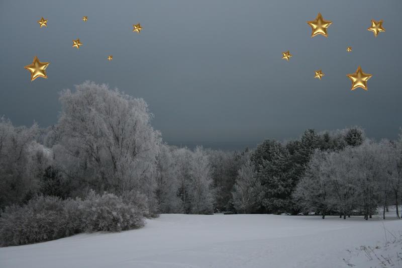 Ringve i vinterprakt