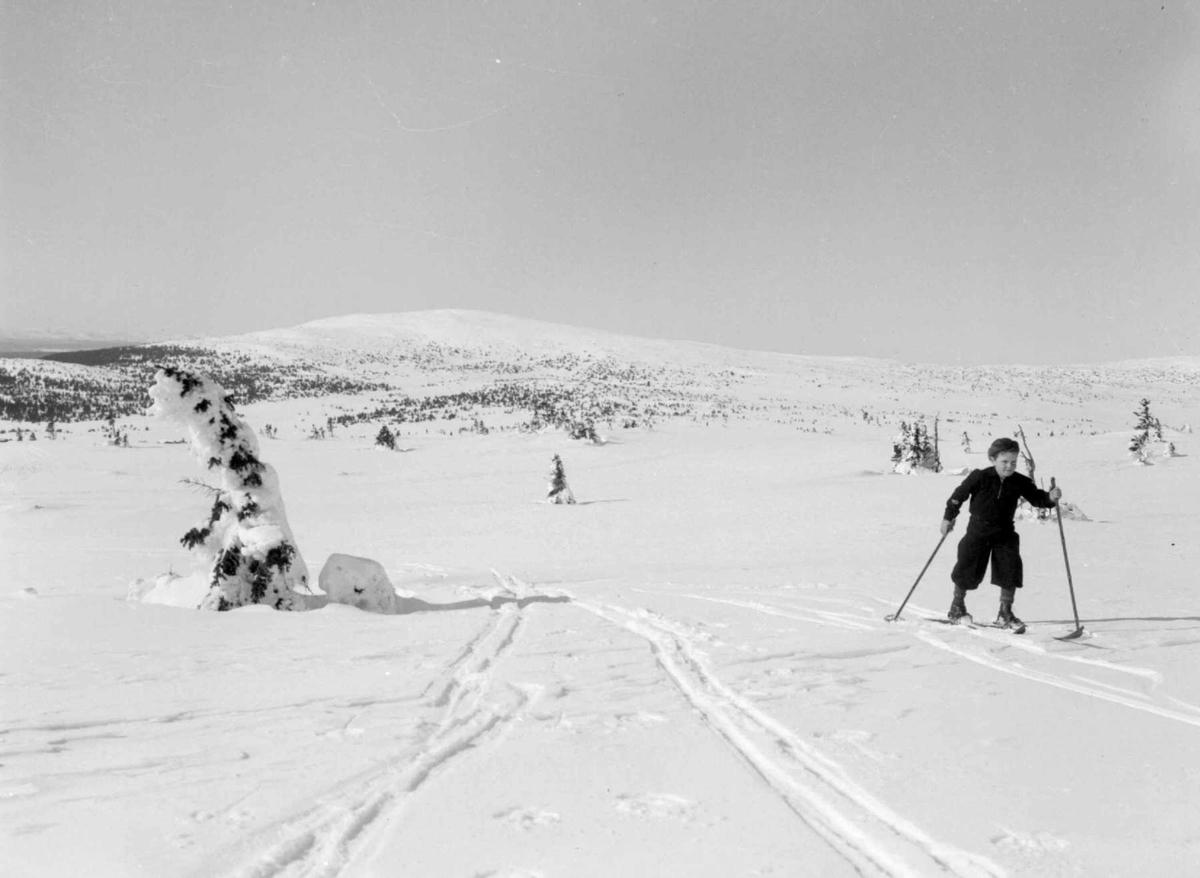 Nordsæter. Mot Neverfjell. Gutt på ski.