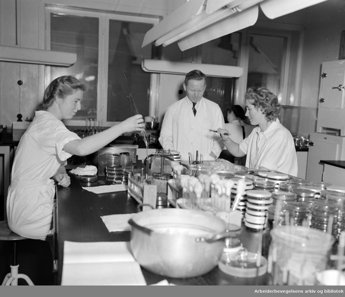 Statens Hoved laboratorium. Februar 1951