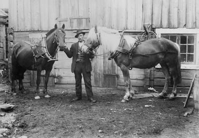 Hest i gårdsrom på Haugan (RMUB.011124)
