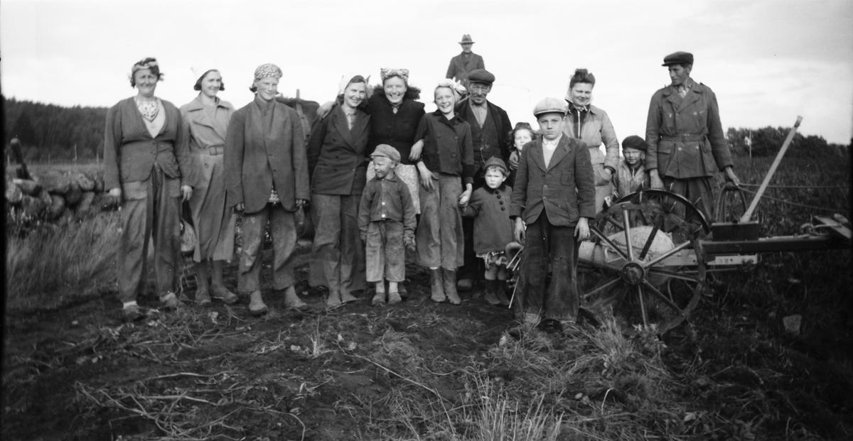 Familjen Snygg har pausat från potatisplockningen för fotografering på åkern - nio vuxna och sex barn. Karl Snygg håller i tömmarna längst till höger och den äldre mannen är August Snygg. Kvinnan i mitten är sannolikt Anna Snygg.
