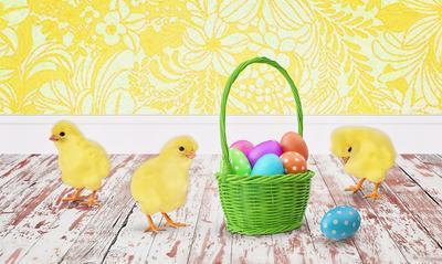 Foto av kyllinger og påskeegg