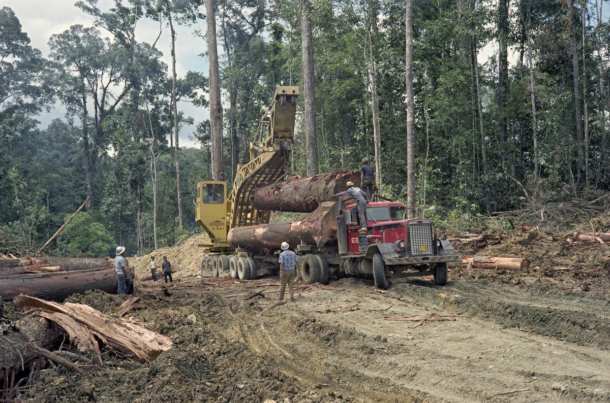 Bilde er av tropisk skogbruk ved Davao på øya Mindanao på Filipinene i 1968 (Foto/Photo)